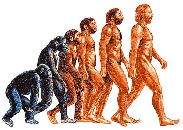 эволюция-человека