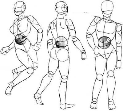 тело-человека