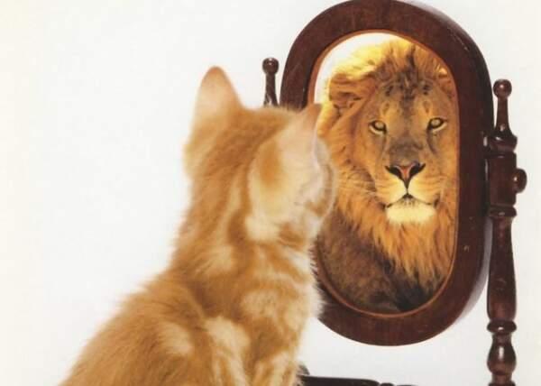 Самооценка: мифы и правда